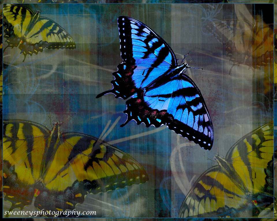 Plaid Butterflies - photographer in Madison WI